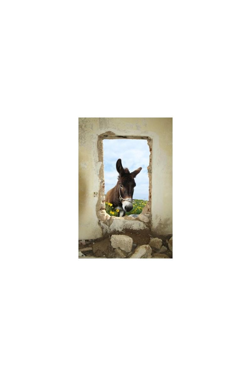 Fototapeta F2104 - Osiołek w oknie