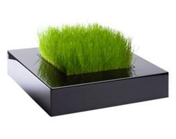 Mini ogródek z oprawą Chlorophylle
