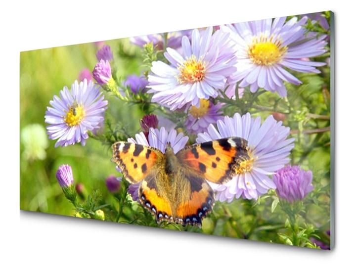 Obraz Akrylowy Kwiaty Motyl Roślina Natura Obrazy Zdjęcia