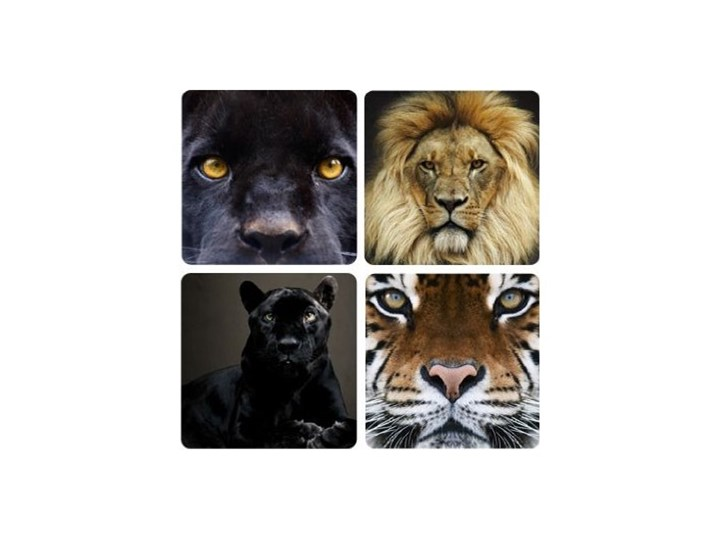 Samoprzylepne Obraz Na ścianę Dangerous Eyes Quattro Puma Czarnym