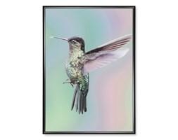 Plakat Koliber Holograficzny