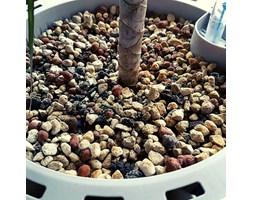 Substrat do roślin doniczkowych Airy Base 3 litry