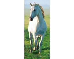 Fototapeta White Horse 514