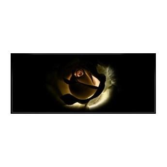 Fototapeta na flizelinie Róża na czarnym tle 1552VEP
