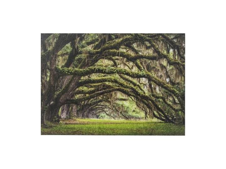 Obraz Nature Trees