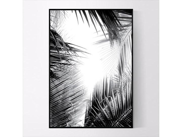 Plakat Czarno Białe Palmy No1 Plakaty Zdjęcia Pomysły