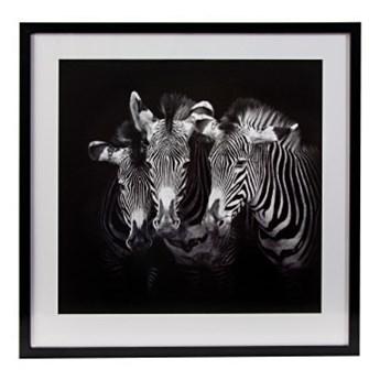 Obraz Zebry czarno bialy 63 x 63 cm