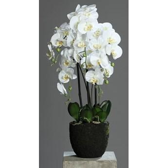 Storczyk Orchidea w Sztucznej Ziemi 85 cm