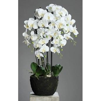 Storczyk Orchidea w Sztucznej Ziemi 92 cm