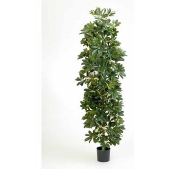 Drzewko Szeflera-kolumna 180cm