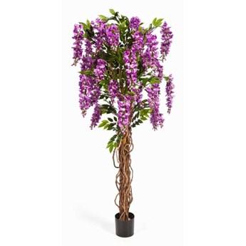Wisteria Glicynia 180cm fiolet