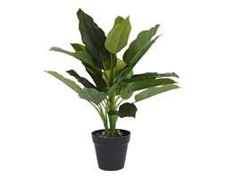 Roślina w donicy III 45cm Intesi kod: 2200000122582
