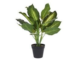 Roślina w donicy IV 45cm Intesi kod: 2200000122599