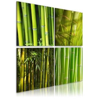 Obraz - Bambusy