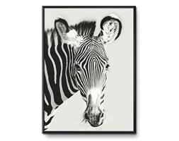 ZEBRA obraz w czarnej ramie za szybą, 31x41 cm