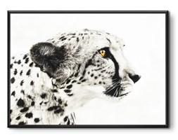 GEPARD obraz w czarnej ramie za szybą, 31x41 cm