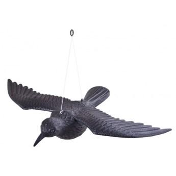 Kruk w locie - odstraszacz gołębi i innych ptaków