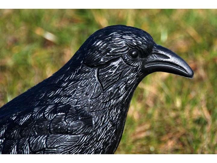 Kruk odstraszacz gołębi i innych ptaków Ptaki Kategoria Figurki ogrodowe Kolor Czarny