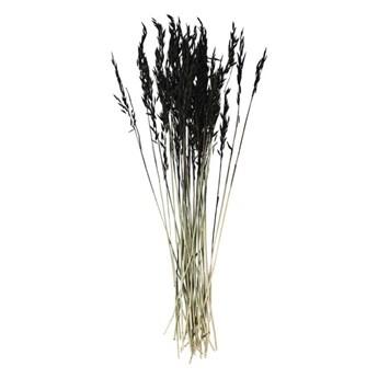 Madam Stoltz - Suszone kwiaty Triticum Aestivum