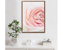 Plakat Różyczka (21x30 cm)