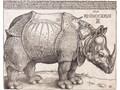 Rhinoceros LOFTLIGHT Rośliny Beton Drewno Kamień Metal Zwierzęta