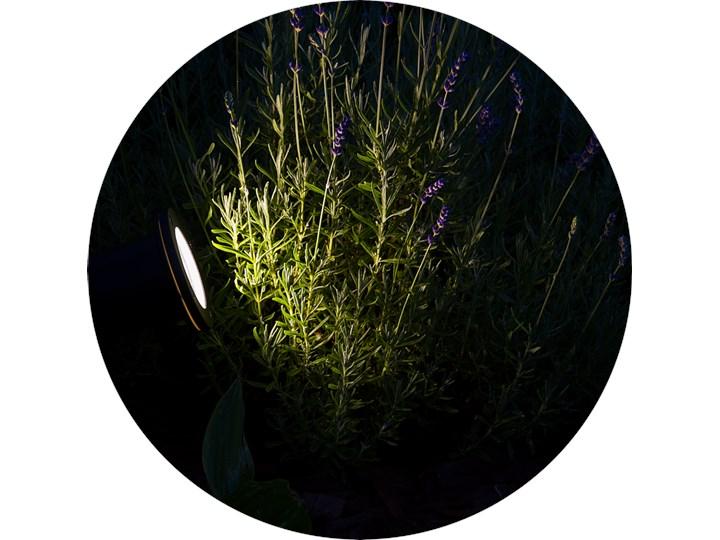 Reflektor ogrodowy wbijany do ziemi lampka do LED HORTUS GU10 IP65 czarny EDO777112 Garden Line EDO Lampa LED Kategoria Lampy ogrodowe
