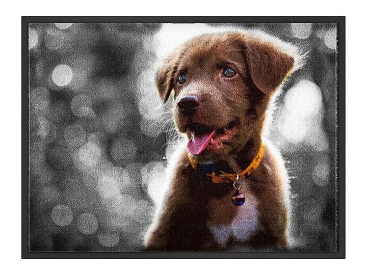 Wycieraczka z motywem psa | bonprix