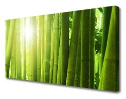 Obraz na Płótnie Bambus Roślina