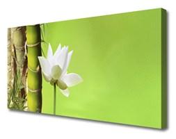 Obraz Canvas Bambus Łodyga Roślina Natura
