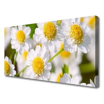 Obraz Canvas Kwiaty Stokrotka Natura