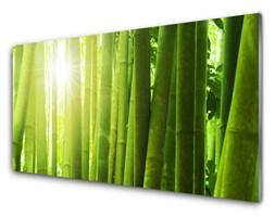 Obraz na Szkle Bambus Roślina