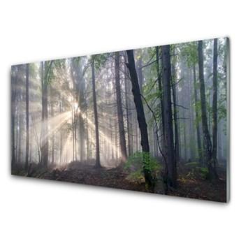 Obraz na Szkle Las Natura Drzewa