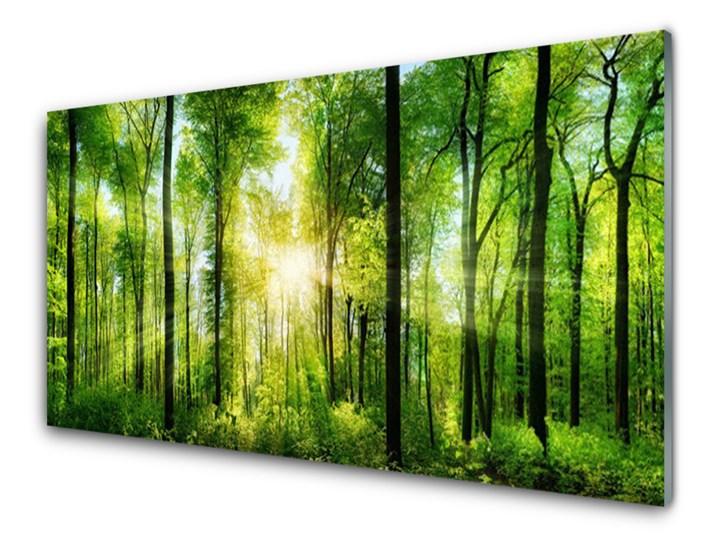 Obraz na Szkle Las Natura Drzewa Wymiary 70x140 cm