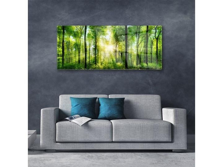 Obraz na Szkle Las Natura Drzewa Kolor Zielony