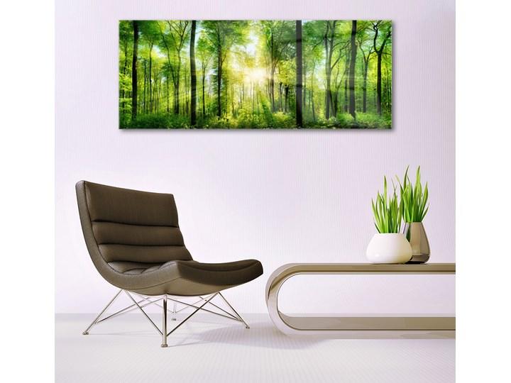 Obraz na Szkle Las Natura Drzewa Kategoria Obrazy Pomieszczenie Salon