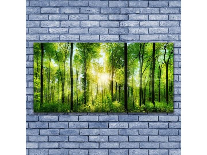 Obraz na Szkle Las Natura Drzewa Wymiary 50x125 cm Wymiary 50x100 cm