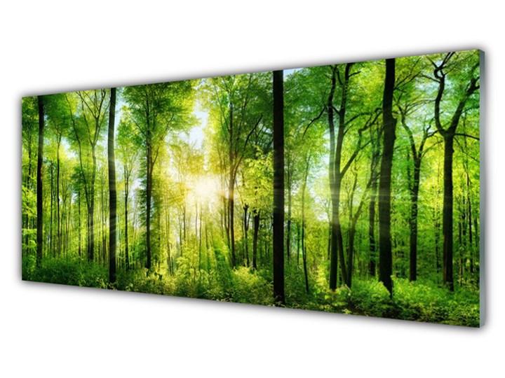 Obraz na Szkle Las Natura Drzewa Wymiary 70x140 cm Pomieszczenie Biuro i pracownia