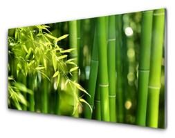 Obraz Szklany Bambus Liście Roślina