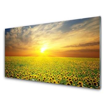 Obraz Szklany Słońce Łąka Słoneczniki