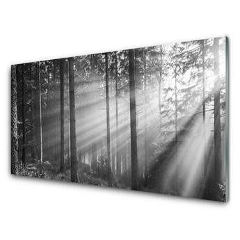 Obraz Szklany Las Natura Promienie Słońce