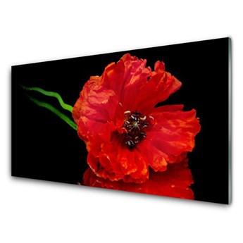 Obraz Szklany Kwiat Mak Roślina Natura