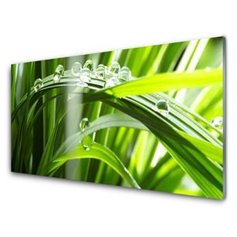 Obraz Akrylowy Trawa Rosa Krople Roślina