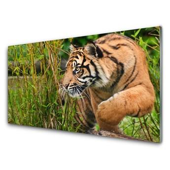 Obraz Akrylowy Tygrys Zwierzęta
