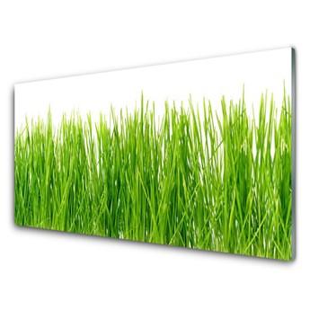 Obraz Akrylowy Trawa Roślina Przyroda