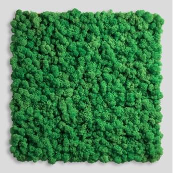 14x14 cm Chrobotek, mech reniferowy islandzki (004 energetyczna zieleń) - basic